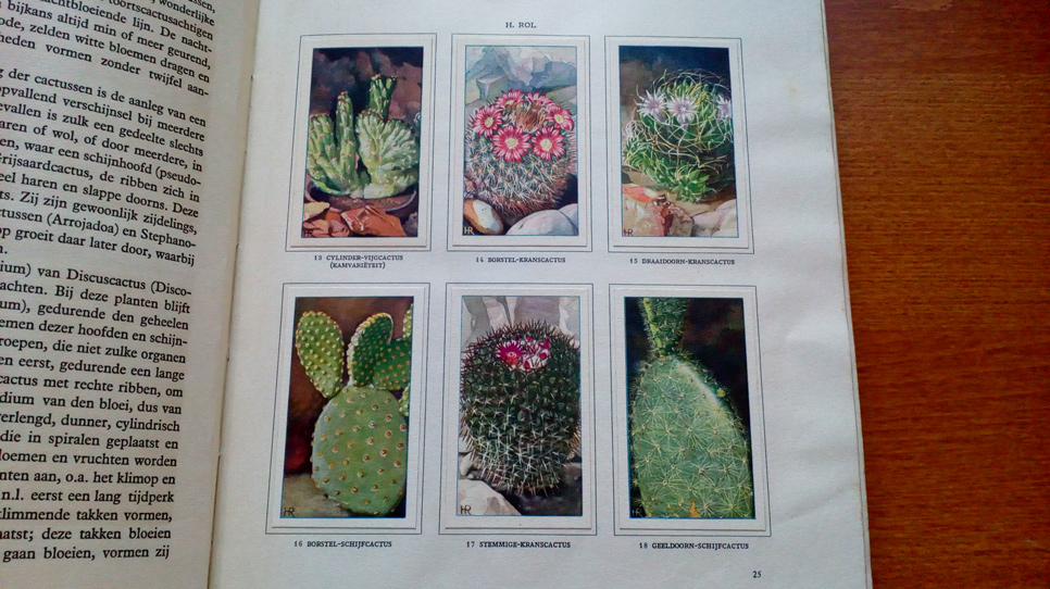 Verkade book cactussen 2