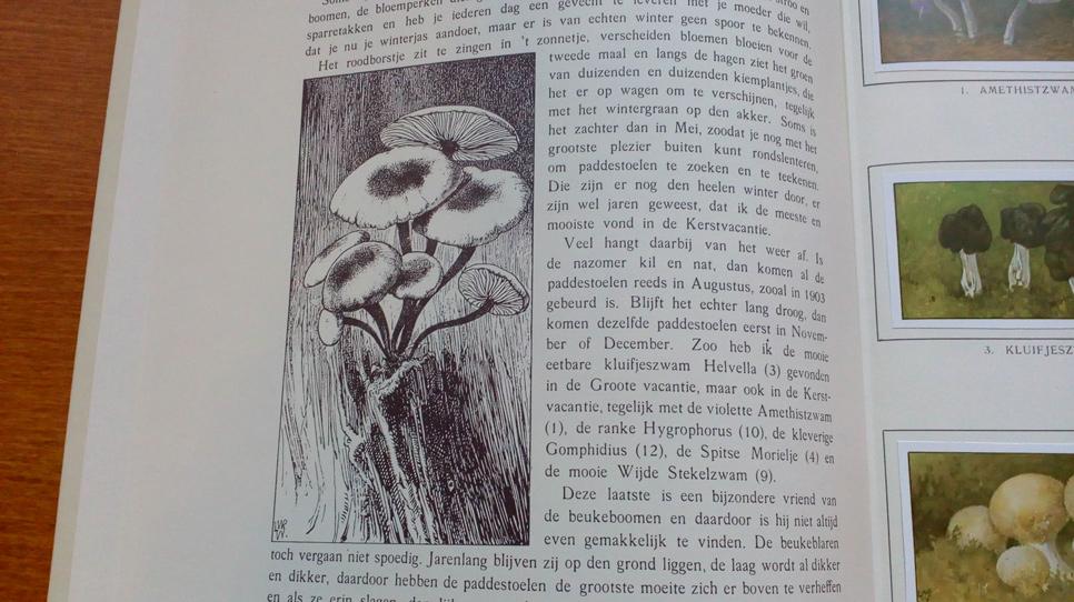 Verkade book engraving print 2