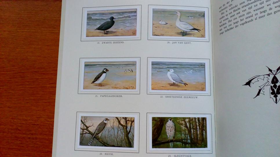 Verkade book birds